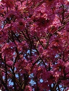 A primavera no StudioClio
